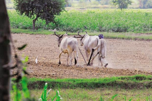Wage and salary employment, not agriculture, was the principal source of income for 56% of the marginal land owning families, according to the survey. Photo: Mint