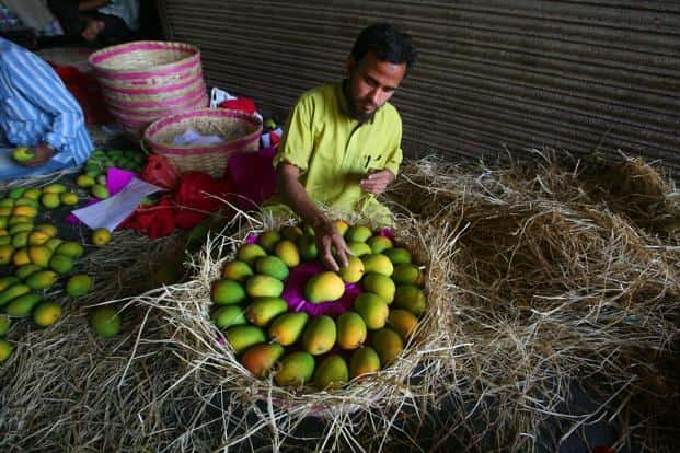 EU agrees to lift import ban on Alphonso mangoes