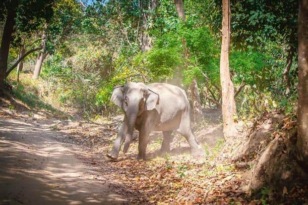 Although we tend to see elephants a lot more than other jungle animals, one in the wild is still a majestic sight.