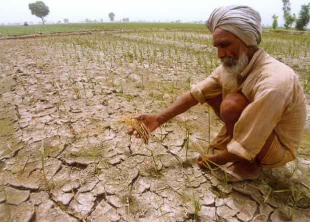 File photo. Just as India was wholly unprepared for the failed monsoon of 1965, it and other nations today may be leaving themselves wide open to drought and famine. Photo: PTI