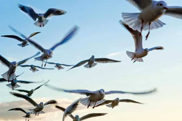 Some visually sensitive birdwatchers can identify birds as they fly past. Photo: iStock