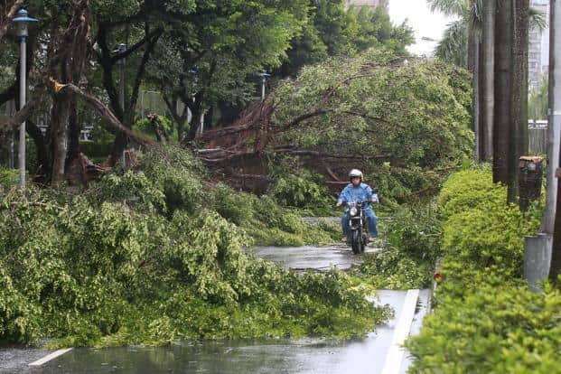 A motorcyclist rides among trees uprooted by strong winds from Typhoon Soudelor in Taipei, Taiwan, 8 August 2015. Photo: Reuters