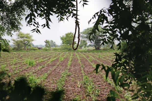 Nagesh Pathe's sparse cotton fields, where he tried to commit suicide on 26 August. Photo: Sayantan Bera/Mint