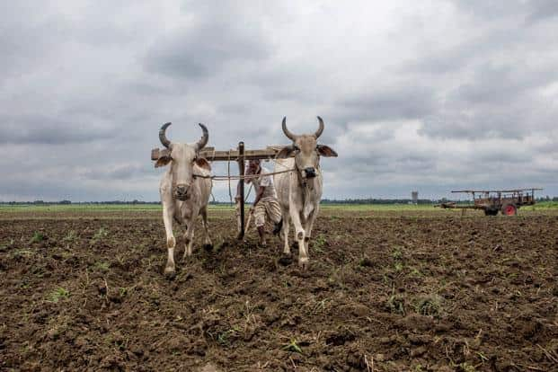 A large majority of India's farmers are finding it difficult to make ends meet. Photo: Bloomberg