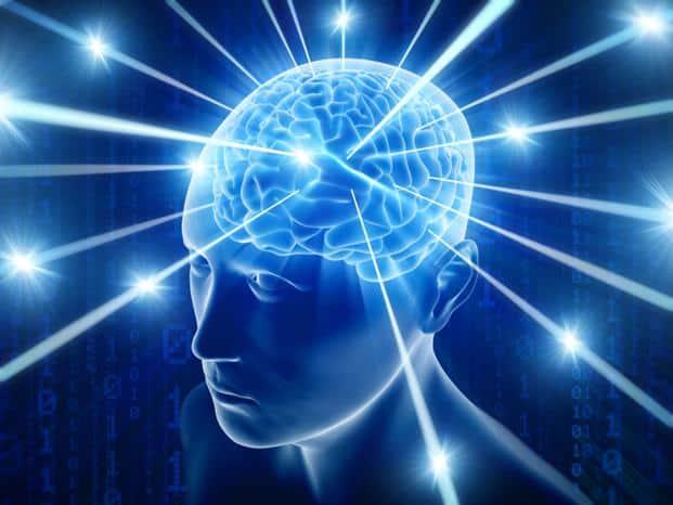 brain.jpg (621×466)