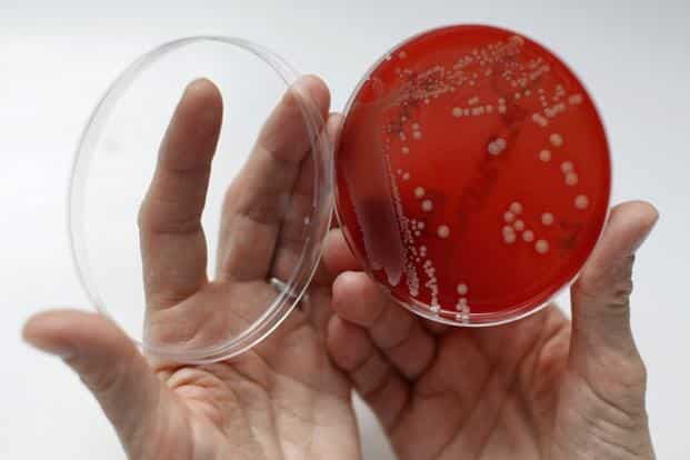 In recent decades, bacteria resistant to multiple drugs, such as MRSA or Clostridium difficile, have grown into a global health threat, while superbug strains of infections like tuberculosis and gonorrhoea have become untreatable. Photo: Reuters