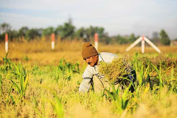 The increased funding is expected to improve irrigation and crop insurance, create a national e-market for agri-produce, promote production of pulses and subsidize interest on short-term agri-credits. Photo: Aniruddha Chowdhury/Mint