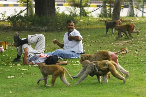 Image result for monkeys of uttarakhand