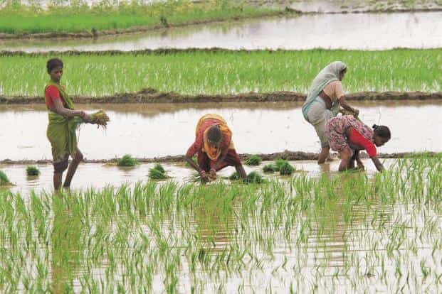 India receives about 80% of its annual rainfall during the June to September south-west monsoon and deficit rains in the past two years led to protracted rural distress. Photo: PTI