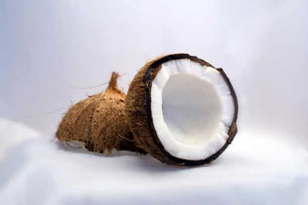 Coconuts are renowned for their hard shells, which are vital to ensure their seeds successfully germinate. Photo: iStock