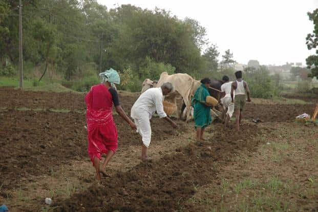 The agriculture ministry says sowing of pulses is nearly 35% more, 12.1 million hectares as against 8.97 million hectares in 2015-16. Photo: Mint