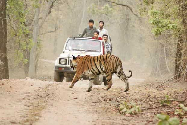 There is enough data to show that across India, a large section of rural and peri-urban communities face human-wildlife conflict situation on a daily basis.  Photo: Hindustan Times