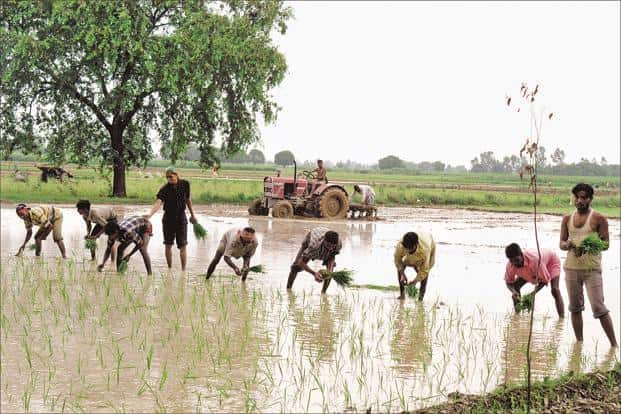 About 800 million of India's 1.3 billion people count on agriculture for a living, yet less than half of its farmland have access to irrigation.