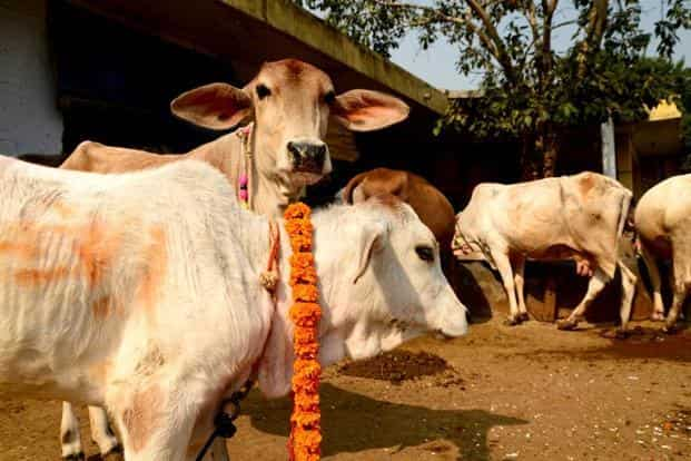 The unique ID for cows will contain details of the cattle's age, breed, sex, height, body colour, horn type, tail switch and special marks, according to a government panel. Photo: Mint