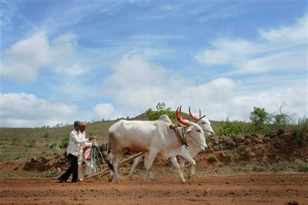 Maharashtra farmers had called off their stir after the Government came out with the loan waiver. Photo: PTI