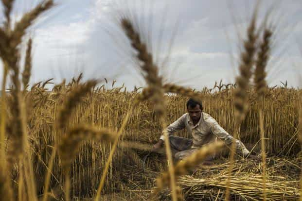 McKinsey Global Institute's report on India's labour jobs attributes the fall in agricultural jobs to job creation between 2013 and 2015. More current jobs data isn't available. Photo: Bloomberg