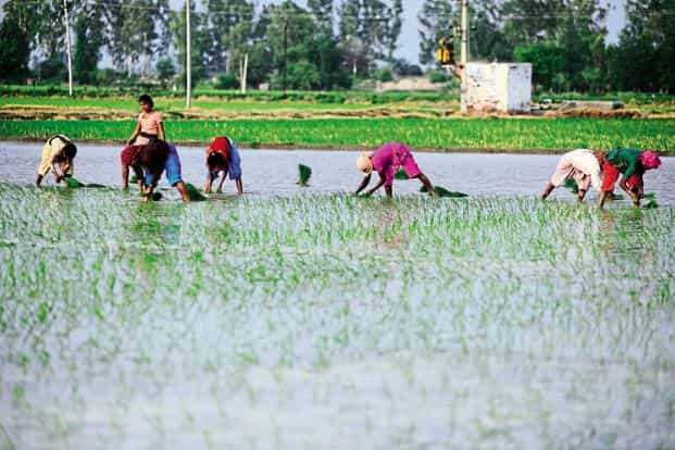 A good monsoon is little comfort for despairing Indian farmers