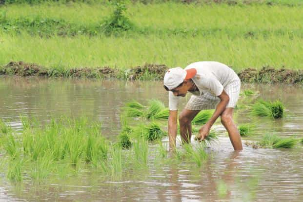 If India's politicians actually want to help farmers, they need to create a vibrant agricultural financial system, one that allows farmers to tide over the bad times. Photo: Mint