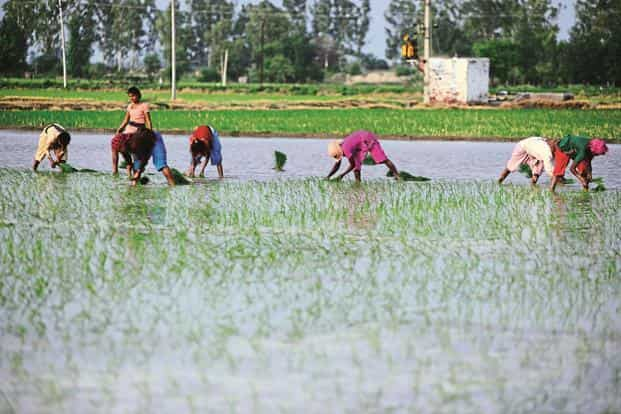The findings assume significance at a time when Indian farmers have been protesting in several states demanding better prices for their crops and loan waivers to tide over losses in farming.