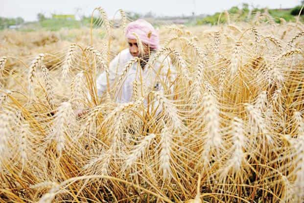 Landless or marginal farmers lack the resources to either buy or lease more land or invest in farm infrastructure. Photo: HT