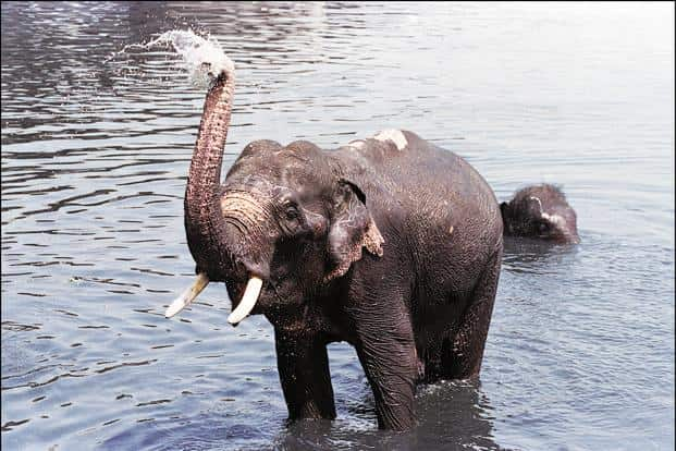 Experts present at the release of census emphasized the importance of preserving elephant corridors to protect and conserve the species. Photo: HT