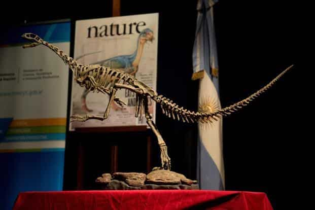 A replica of a skeleton of a Chilesaurus diegosuarezi, a bizarre genus of herbivorous dinosaur, exhibited at the Bernardino Rivadavia Natural Sciences Museum in Buenos Aires, Argentina. Photo: AFP