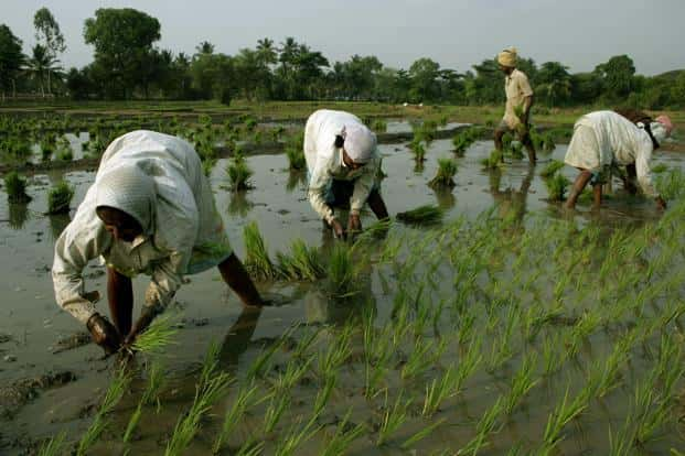 Farmers have the potential to emerge as the largest direct and indirect job creators in the economy. Photo: Bloomberg