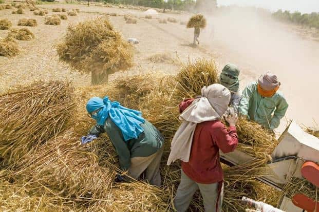 Real wages of casual workers in agriculture and non-agricultural areas were increasing at 7% per annum between 2007-08 and 2012-13. As against this, real wages in agriculture between 2013-14 and 2016-17 have slowed to 1% per annum. Photo: HT
