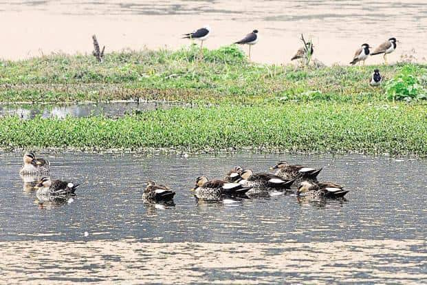 Wetlands can be defined as lands transitional between terrestrial and aquatic eco-systems where the water table is usually at or near the surface or the land is covered by shallow water. Photo: HT