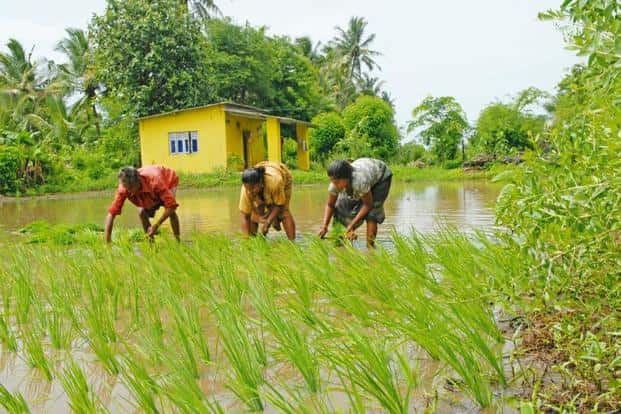 By 22 September, more than 10 million people had enrolled for the farm loan waiver scheme. Of these, 5.6 million had completed their online applications. Photo: Mint