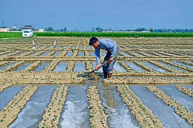 In the two weeks to 7 November, farmers have incurred a loss of Rs6,283 crore, having sold crops at lower than their support price, the All India Kisan Sangharsh Coordination Committee said. Photo: Mint