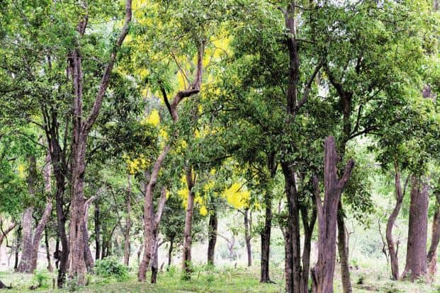 How sensors can help protect trees