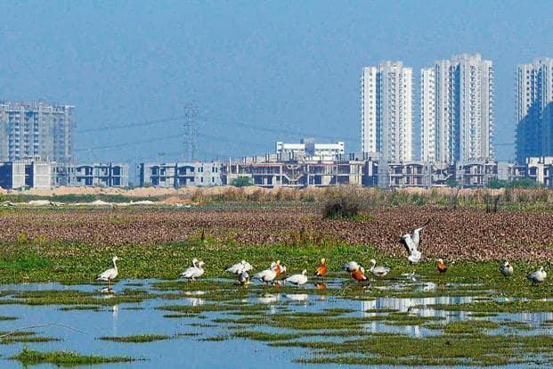 The Basai wetlands in Gurugram. Photo: Pankaj Gupta