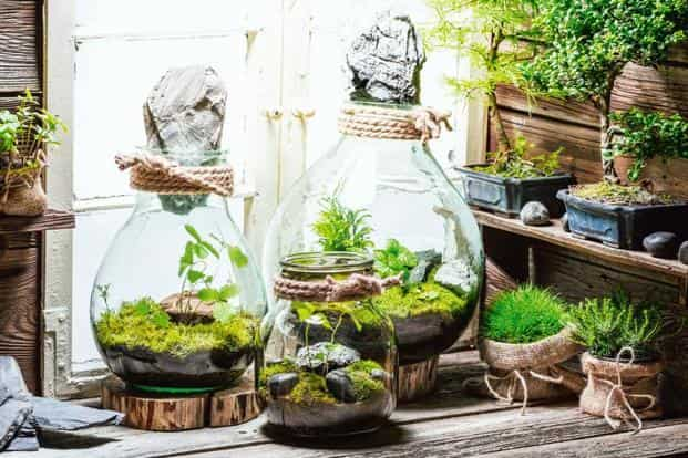 Add Cheer To Your Work Desk With Terrariums