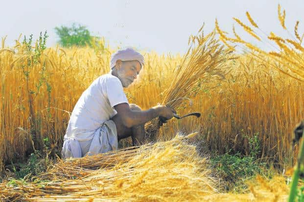 A new price support policy, the government hopes, will help revive rural incomes and placate farmers ahead of important elections. Photo: PTI