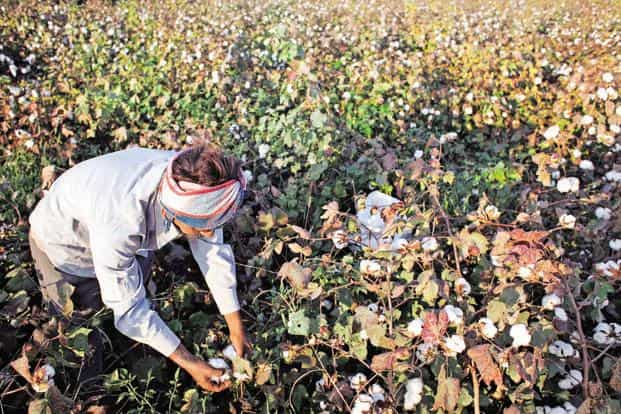 Suminter sources, processes and exports organic products like pulses, cereals and cotton. Photo: Bloomberg