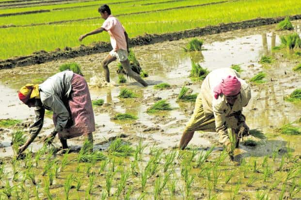 It is now well known that farm loan waivers are no solution to the problem of credit defaults in agriculture. Photo: Bloomberg