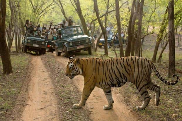 Tigers have lost more than 93% of their historical range, according to WWF, due to habitat degradation. Photo: Shivang Mehta/Alamy Stock Photo